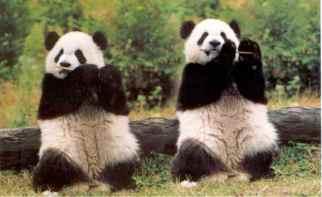 Panda Update - Google Algorithm