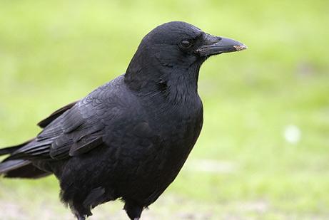 MAPAS BF3 y tal 060606-crows_big